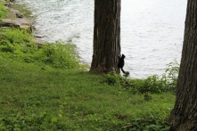 A squirrel at Lancaster Ontario. The place was teeming with them.