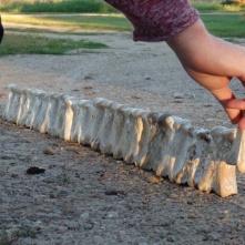 Horse ankle bones