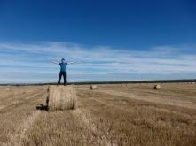 Grass field in Reno