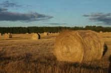 Hay bale on the grass farm near Reno
