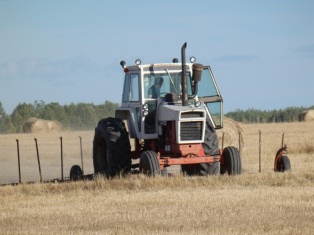 Neil harrowing on the grass farm