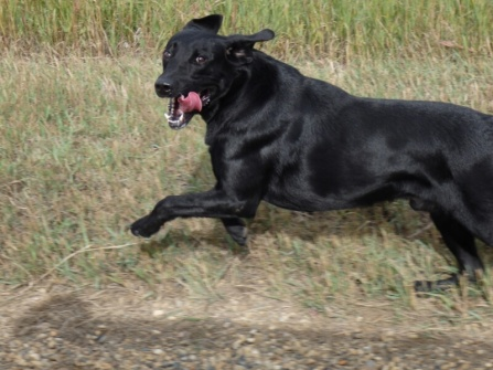 Cooper running along side us as we drove down the raod