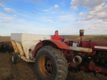 Franziska driving an old International 560 and feeding the Bison with grain