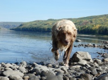 Foxy spent more time in the water then on land