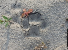 Footprint we found at our camping spot