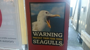 Vancouver has some pretty aggressive seagulls