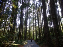 On the way to Goldstream waterfall