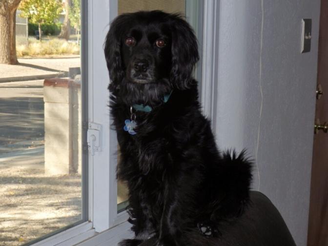Bronson and Karl's dog Ollie