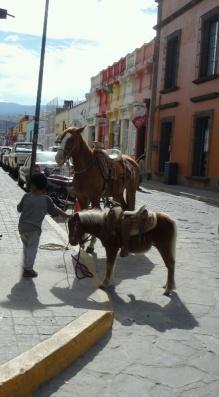 Horses in Morelia