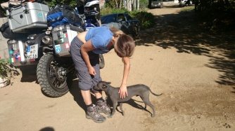 Hairless dogs built for hot weather