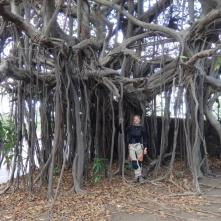 Tree at Masaya vulcano