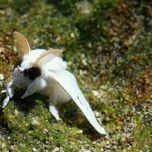 Moth, Puerto Viejo
