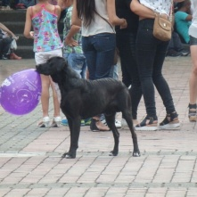 Pereira, this dog was delighted with his balloon