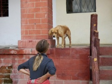 An inquisitive dog at Las Lajas